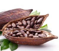 ნედლი მთელი კაკაოს მარცვლები / raw cacao beans Criollo, 200g