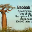 1280-606228-1-baobab-tree-fact